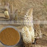 Chinese herbal medicine cistanche tubulosa extract powder