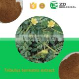 Supply Tribulus Terrestris Powder Extract,tribulus terrestris extract (total saponins 98%)