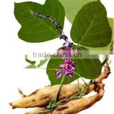 Factory Direct Supply high quality 90% Isoflavones Kudzu Extract pueraria extract powder mirifica extract powder