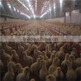 Steel Structure Design Poultry Farm Shed Industrial Chicken House Automatic Poultry Farm Equipments for Sale