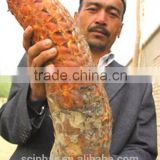 Cistanche Deserticola Extract / cistanche tubulosa extract HALAL KOSHER Certificates Natural Sex inprovement