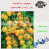 Good quality yellow Oblong Cherry tomato seeds