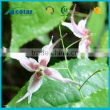 ISO22000 factory supply herb epimedium health care damiana extract