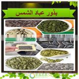 Sell black striped oil sunflower seeds