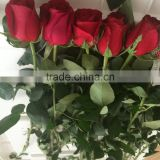 Freshly cut roses fresh cut pink/red/blue/green rose fresh flowers best price