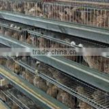 the new design quail cage from china