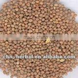 Radish Seed extract powder