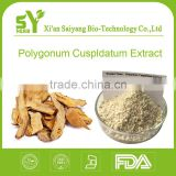 Supplier manufacturer Top quality Polygonum Cuspidatum Extract / resveratrol 50% 98% 99%