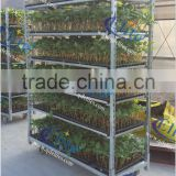 251Seedling Trolleys