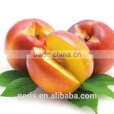 China cheap Fresh Nectarine