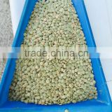 Green Lentils 6mm good quality