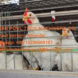 Poultry Farming Equipment Broiler Cage & Broiler Coop & Meat Chicken Cage in Chicken Shed for Nepal