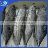 Canned tuna used skipjack tuna price