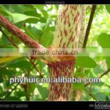 High quality Botanical extracts Pure Polygonum cuspidatum extract