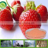 GMP factory of organic strawberry powder