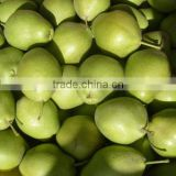 Chinese fresh early su pear with best price for export