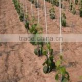 Fiberglass pultruded vineyards or eggplant support for outdoor facility