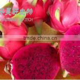 Organic Pure Pitaya fruit extract powder,Vitamin C in a low price