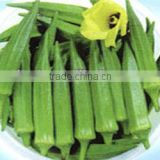 New fresh Frozen Okra