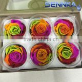Wholesale best selling preserved ecuador roses head