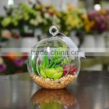Wholesale Glass Globe Hanging Succulent Plants Terrarium Geometric