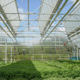 PC Sheet Greenhouse with Fully Opened Roof Ventilation