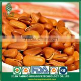 Wholesale Acid Digestion Fast Quick Diet Open Pine Nuts in Shell