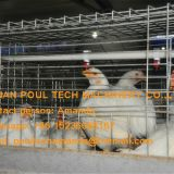 Cyprus Poultry Farm A Type Battery Broiler Cage & Chicken Cage & Chicken Coop to Improve Chicken Meat Production