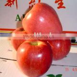 red star apple