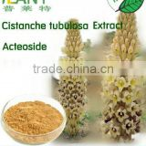 GMP Manufacturer Cistanche tubulosa extract-Acteoside and Echinacoside