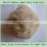 Dehaired camel hair from Alashan, Inner Mongolia