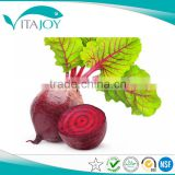 High quality red beet root extract,Organic red beet root juce powder,Red Beet Extract