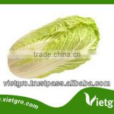 High Quality Fresh Organic Cabbages VGCC0012