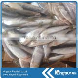 Canned Frozen Sardine Fish whole sale seafood
