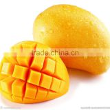 Top selling weight loss product african mango seed extract powder