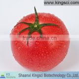 Antioxidant Herb Medicine Lycopene from Tomato Extract Purity 5% 10% HPLC Dark Red Powder or Oil