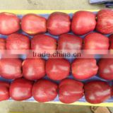 2013 fresh red appls from china