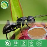 GMP factory 10:1 powder black ant extract