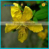 with Kosher, Halal, FDA registered st johns wort tea extract benefits