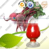 Factory Supply 100% Purity Dried Red Beet Powder Vegetable Fruit Powder