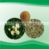 Chinese herbal Fennel P.E. fennel seed extract