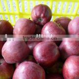 fresh red delicious apple 2015