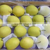 Fresh Snow Shandong Pear