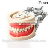HOT SELL DENTAL ACRYLIC DENTURE TEETH