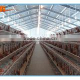 Steel Structure Prefabricated Chicken House