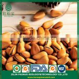 Wholesale Particle Filled Screw Weight Open Pine Nuts in Shell