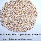 Chinese White Sorghum