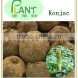 Top quality amorphophallus konjac extract powder