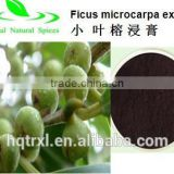 Ficus Microcarpa Extract of factory supply
