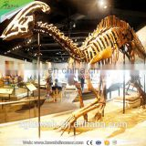 KAWAH Decorative Dinosaur Replica Life-Size Fiberglass Dinosaur Skeleton Model For Museum